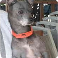 Adopt A Pet :: Taylor aka 'Blue-B - Warren, NJ
