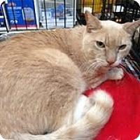 Adopt A Pet :: Buffy - Modesto, CA