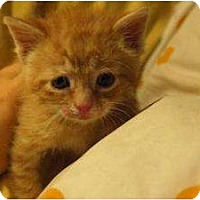 Adopt A Pet :: Dan - Island Park, NY