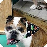 Adopt A Pet :: Maestro - conyers, GA