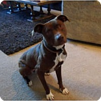 Adopt A Pet :: Prada,very sweet and smart! - Sacramento, CA
