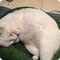 Adopt A Pet :: Emily - East Hanover, NJ