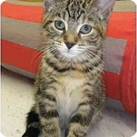 Adopt A Pet :: Willow - Windsor, ON