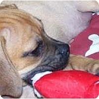 Adopt A Pet :: Duke - Antioch, IL
