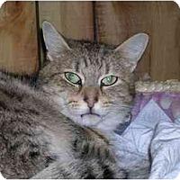 Adopt A Pet :: Henry - Pascoag, RI