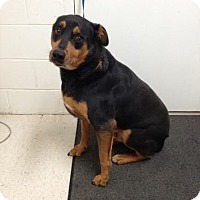 Adopt A Pet :: Roscoe - Lancaster, VA