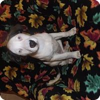 Adopt A Pet :: Lewis - Mechanicsburg, PA