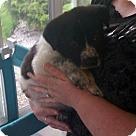 Adopt A Pet :: Jude