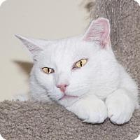 Adopt A Pet :: Bones - Philadelphia, PA