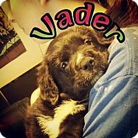 Adopt A Pet :: Vader - Winchester, VA