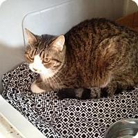 Adopt A Pet :: Hemi - Harrisonburg, VA