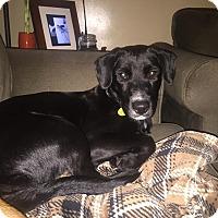 Adopt A Pet :: Hannah - Rexford, NY