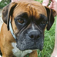 Adopt A Pet :: Addy - Brentwood, TN