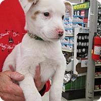 Adopt A Pet :: Jaxon - Rocky Mount, NC