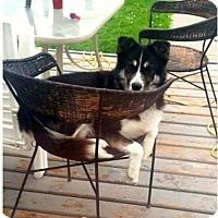 Adopt A Pet :: DIESEL - Edmonton, AB