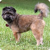 Adopt A Pet :: Chico - Bedford, VA