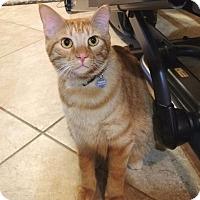 Adopt A Pet :: Finn - Roanoke, TX