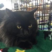 Adopt A Pet :: Ben - McKinney, TX