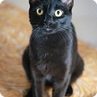 Adopt A Pet :: Tiara - Boise, ID