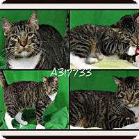 Adopt A Pet :: JAX - St. Peters, MO