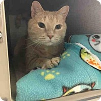 Adopt A Pet :: RON WEASLEY - Canfield, OH