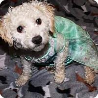 Adopt A Pet :: Shyzee - Salt Lake City, UT