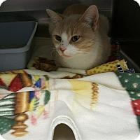 Adopt A Pet :: Blitzen - Cody, WY