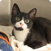 Adopt A Pet :: Rizzo - Naperville, IL