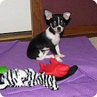 Adopt A Pet :: Minnie - Harrisonburg, VA