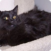 Adopt A Pet :: K-Hodnick1-Morrie - Colorado Springs, CO