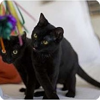 Adopt A Pet :: Ruth Page & Dorothy Dandridge - Chicago, IL