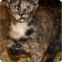Adopt A Pet :: Darcy - Arlington, VA