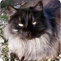 Adopt A Pet :: Black Magic - Davis, CA