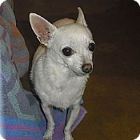 Adopt A Pet :: Sweet Pea - Wickenburg, AZ