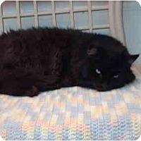 Adopt A Pet :: Wisdom - El Cajon, CA