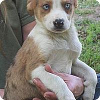 Adopt A Pet :: Lanny - Brattleboro, VT