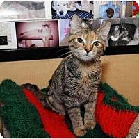 Adopt A Pet :: Emma - Farmingdale, NY