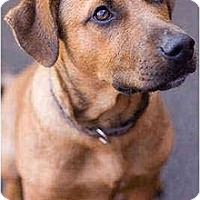 Adopt A Pet :: Kai - Portland, OR