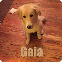 Adopt A Pet :: Gaia - Adopted!!! - Huntsville, ON
