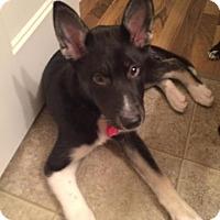 Adopt A Pet :: Saturn - Saskatoon, SK