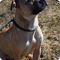 Adopt A Pet :: Peanut - Cary, IL
