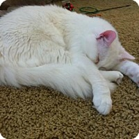 Adopt A Pet :: Storm - Fairborn, OH