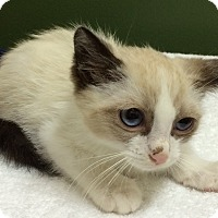 Adopt A Pet :: Shoe - Whittier, CA