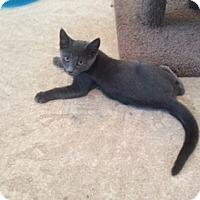 Adopt A Pet :: GRADY - Hamilton, NJ