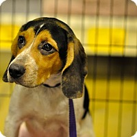 Adopt A Pet :: Pina Colada - Gainesville, FL