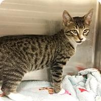 Adopt A Pet :: Trigger - Marietta, GA