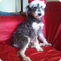 Adopt A Pet :: Christina - San Diego, CA