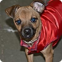 Adopt A Pet :: Kimba - Meridian, ID