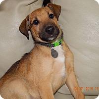 Adopt A Pet :: Hon - Huntsville, AL