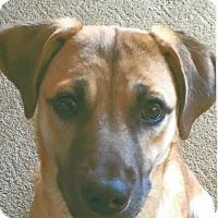 Adopt A Pet :: Joan (Bridge Club Bunch) - Alexandria, VA